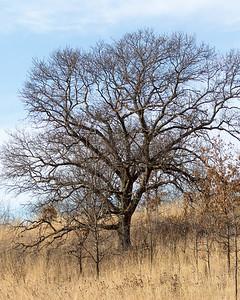 Prairie Moraine County Park