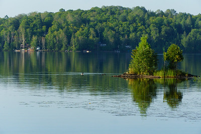 Loons And Trees