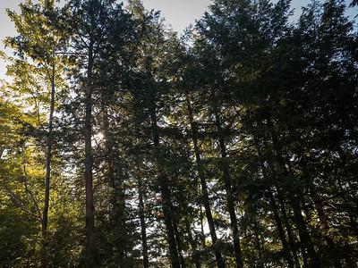 Cottage Trees