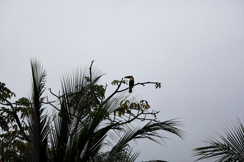 Osa Peninsula, Corcovado National Park