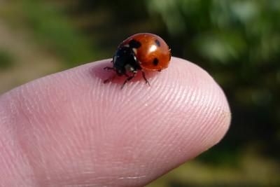 Mr Ladybug on Mike's finger.