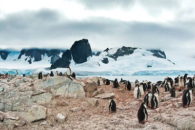 In the foreground, there is a Gentoo colony. In the background glaciers do their patient work on the peaks and valleys of the island.