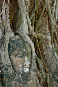 When Ayuthaya was invaded, the invading Burmese cut off the heads of all the Buddha images. This one was caught in the roots and vines of a tree where it was captured and imprisoned.