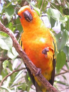 Kuranda Rain Forest: Petting zoo.