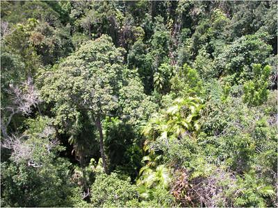 Kuranda Rain Forest