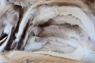 We spent some time walking through a dockside market. I liked the pattern formed by these pelts for sale there.