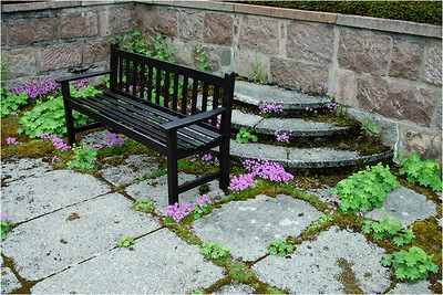 And finally a nice bench in the corner of a plaza. Many of the plazas are paved with stone, but the gardeners use even the spaces between the stones for garden plants ... like here.