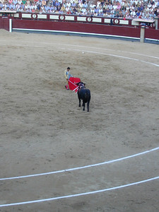 At the end of the fight, the matador stands triumphant. Dressed in sequined costume, he looks less the consummate athlete but more the entertainer. A proud, arrogant Liberacci.  Wielding a saber, the perfect end to this ritualistic execution is a single thrust between the vertebra and straight through the heart. Executed perfectly, the bull drops instantly to the ground. We will forgo this image.