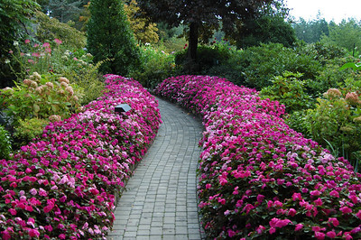 Butchart Gardens:  These gardens have been around for a century and have improved with age. For my money, these are among the loveliest gardens in the world. We were there on a day that sported sunshine, rain, sleet, with lightning and thunder thrown in for good measure. Again, if you get to Vancouver Island, make this a must-see destination!