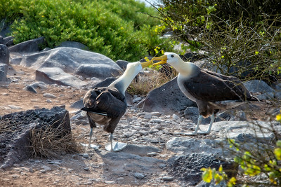Ecuador - Galapagos Islands