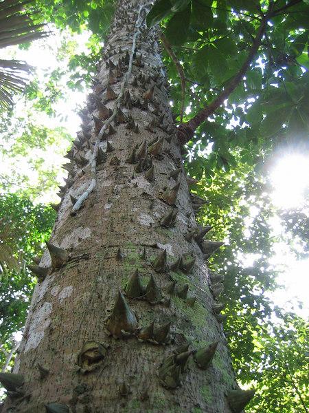 Bolivia-Amazon 051