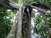 Bolivia-Amazon 038