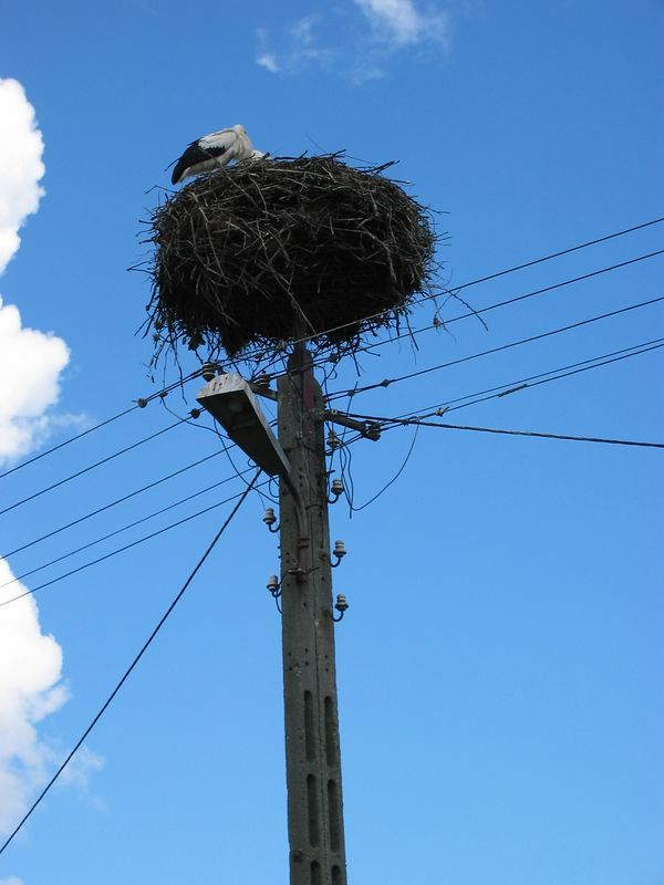 On the drive to Mikalojaky, Katrina saw these stork nests.  I had to stop every 300 meters to take another picture.