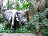 The Jungle Cruise was anti-climatic after a safari in Tanzania.