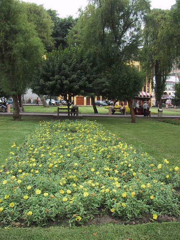 D0481   Kennedy Park, Miraflores.