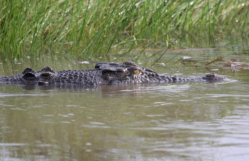 finally find a croc