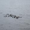 """Seat Otter """"raft"""""""