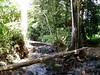 Jungle, Raiatea