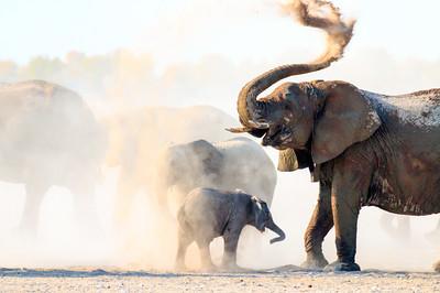 Etosha Dust Bath