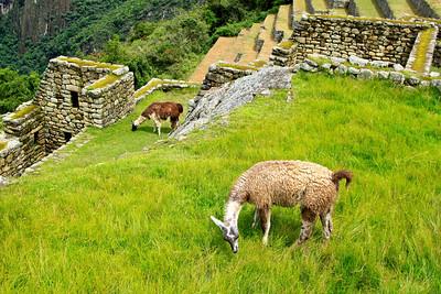 Rain on Machu Picchu