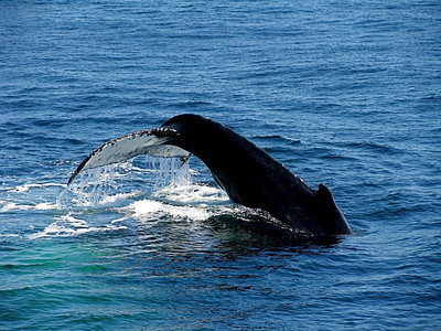 Bostonian Whales