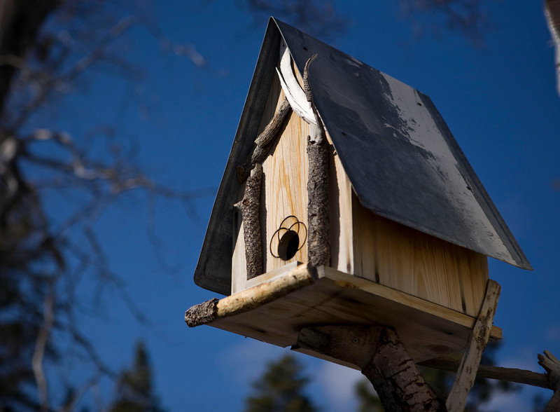 Cool birdhouse in Wrightwood.