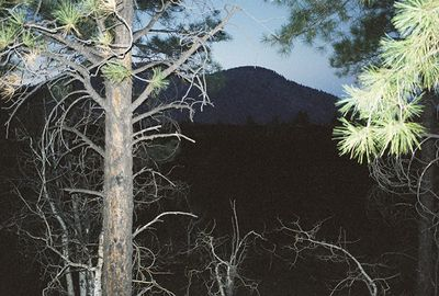 11/13/99 Bonito Lava Flow, Sunset Crater Volcano National Monument