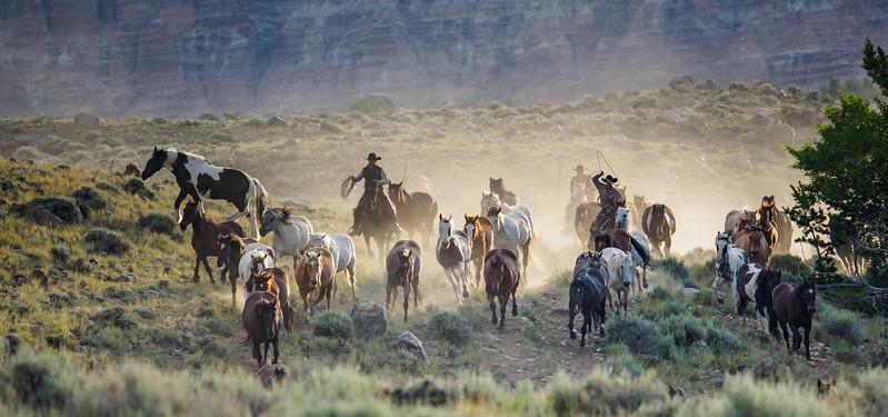 Riding the Herd
