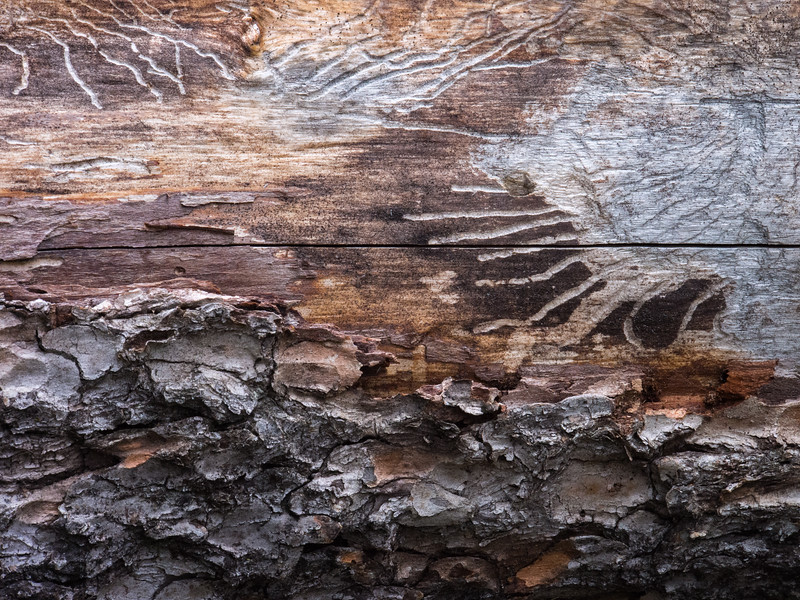 This felled log has scratches on it reminiscent of hieroglyphics.