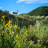 While walking through this meadow, Niki had a close encounter with a family of mule deer.
