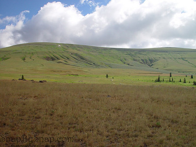 The gentle rolling hills on the top of Bighorn National Forest in Wyoming.