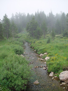 A streaming with fog running through Bighorn National Forest in Wyoming.