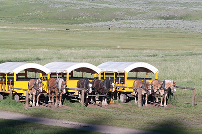 Yellowstone Vacation - Roosevelt Area - Chuckwagon Dinner in Paradise Valley
