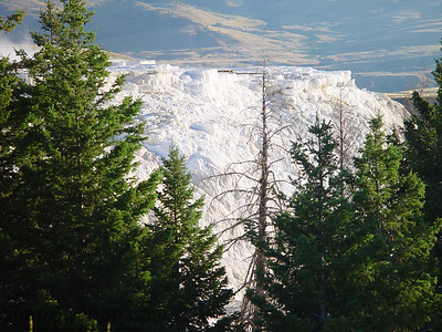 The snow white terraces of Mammoth Hot Springs makes a sharp contrast with the green of the forest in Yellowstone National Park.