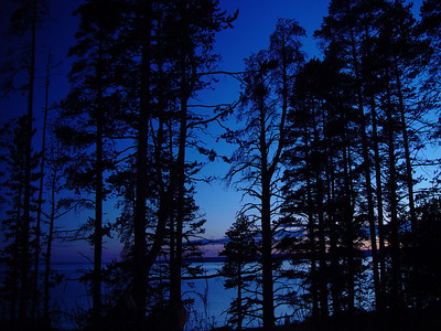 Looking through some trees at Yellowstone Lake in the late evening in Yellowstone National Park.