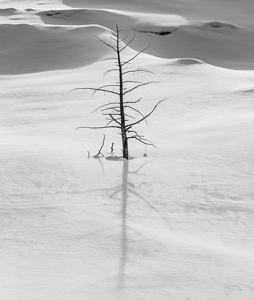 Yellowstone Snow Shadow