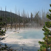 The Wood Petrifies from the Heat - Geyser  - Yellowstone National Park  9-5-05