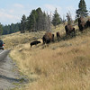We All Love to See the Animals  - Yellowstone National Park  9-5-05