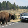The Bison Do Have the Right of Way   - Yellowstone National Park  9-5-05