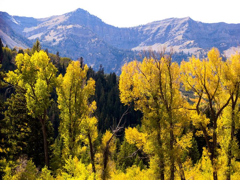 Bridger-Teton National Forest - September 2004