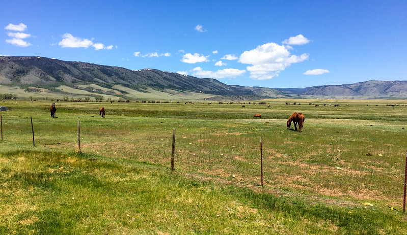 These are wild horses.  They look much like domesticated horses, except for...well, they just look like normal horses.