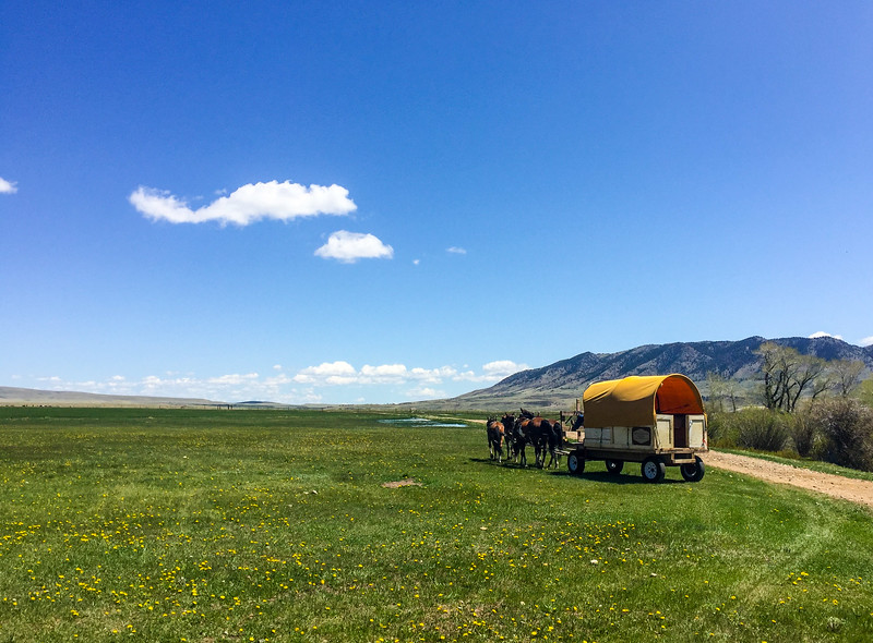 Darn, it's getting cloudy!  We took a trip to a wild horse ranch and got to see...horses.
