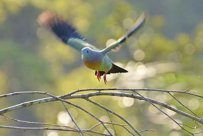 SE Asia Birds (&  More)