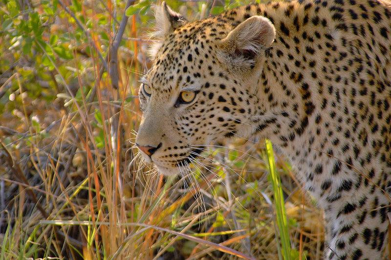 Xakanaxa, Okavango Delta, Botswana, Africa