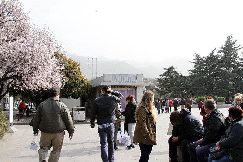The Plum trees were blooming at Terracota Warriors site
