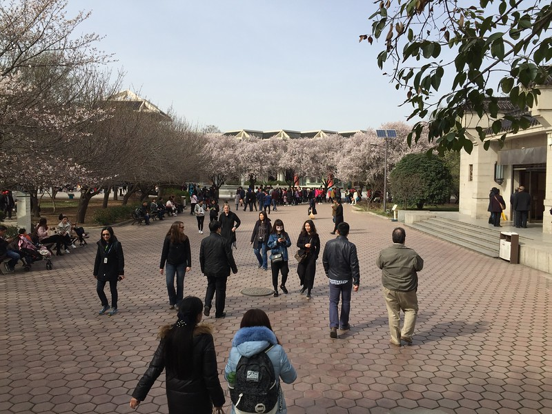 Outside the Terracota Warrior buildings...The blooming trees were quite impressive.