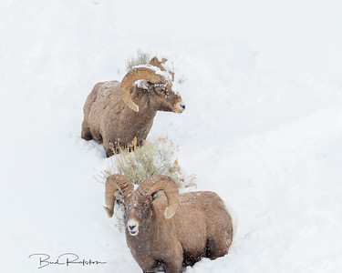 Two Rams 5BR5430