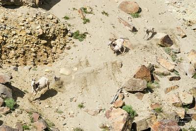 Fleeing Herd