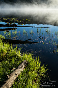 Fog Over Lily Lake