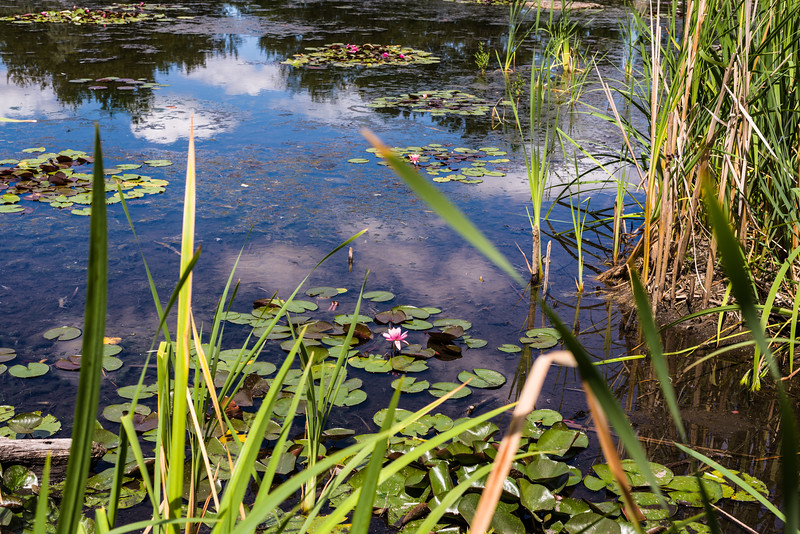Lilly pond at Yakima Sportsmen SP